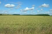 Farmland East of Huggate