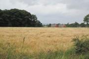 Farmland near Raby