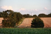 Farmland south of Rattlesden