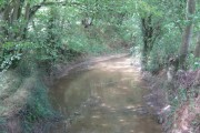 The River Beult in Cook Wood