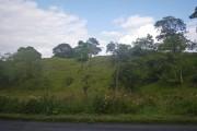 Sparse woodland east of Ballygrant