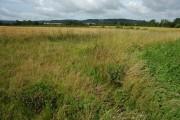 Farmland at Leigh Sinton
