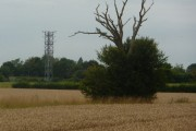 Lone dead tree and mast