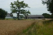 Wheat field and farm buildings