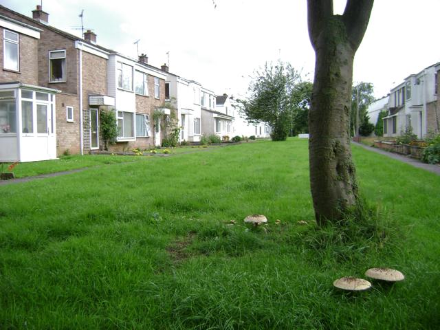 St Ann's Close, Sydenham, Leamington Spa