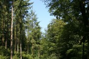 Erme Valley Woodland