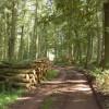 Wye Valley walk through Capler Wood