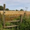 Wye Valley Walk stile and barley field near Fishpool Hill