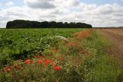 Field boundary near Feltwell