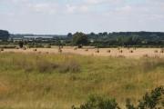 Farmland west of Feltwell