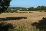 Cornfields below Upper Hartshay