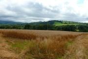 Caeau Amaethyddol ger Bochrwyd / Farmland near Boughrood