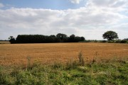 Stubble field and woodland near Smallwood Green