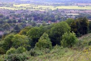 Woodland on the slopes of Whiteleaf Hill
