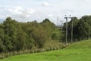 Birch wood, Bonnybridge