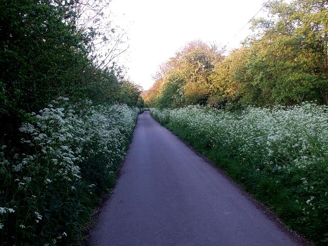Marshcroft Lane, Spring