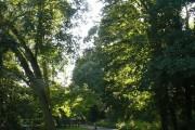 Woodland at Stoke Lock