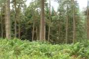 Kilbean Wood