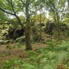 High Cademan, Cademan Wood, Charnwood Forest