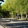 Tree-lined Yarmouth Road