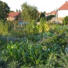 Allotments on Highcombe