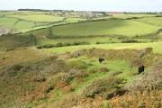 Grass and Heath