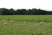 Sheep, Mannerston Holdings