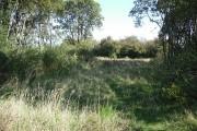 Railway woodland
