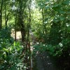 Paignton : Paignton Zoo Railway Track