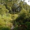 Birch woodland on Holystone Common