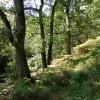 Overgrown path through The Oaks