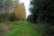 Woodland at Thrupp