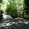 Paignton : Paignton Zoo, Footpath & Peacock