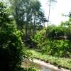 Paignton : Paignton Zoo, Orangutan Island