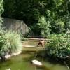 Paignton : Paignton Zoo & Orangutan