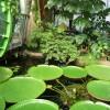 Paignton : Paignton Zoo, Crocodile Swamp