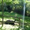 Paignton : Paignton Zoo, Ostriches