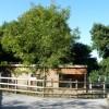 Paignton : Paignton Zoo, Barbary Sheep Enclosure