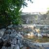 Paignton : Paignton Zoo Meerkat Enclosure