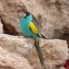 Paignton : Paignton Zoo, Desert Zone Bird