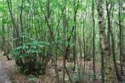 Snipe Wood