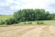 Woodland near Chalket Farm