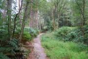 Tunbridge Wells Circular Path - Chase Wood