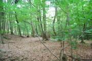 Woodland in Eridge Park by the Tunbridge Wells Circular Path