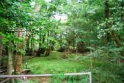 Woodland by the Tunbridge Wells Circular Path - Eridge Park
