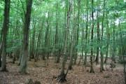 Forge Wood