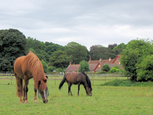 Horses on the fields at Home Farm, Tring