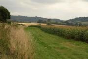 Maize near Drayton