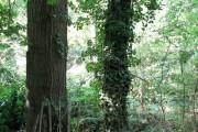 Woodland beside the railway line