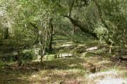 Elkhams Grave, woodland